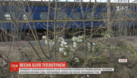 Неподалеку херсонского железнодорожного вокзала расцвели плодовые деревья