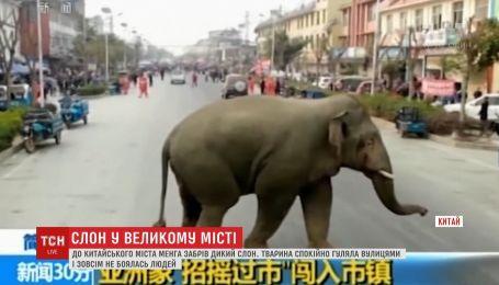 Дикий слон случайно забрел в китайский город Менга