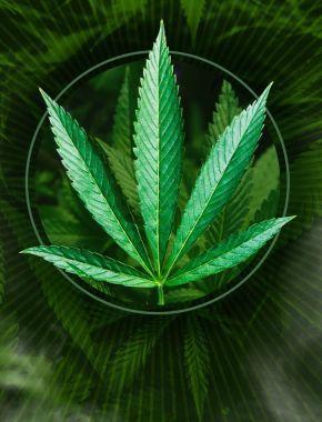 Марихуана видео ютуб марихуана в алкоголь