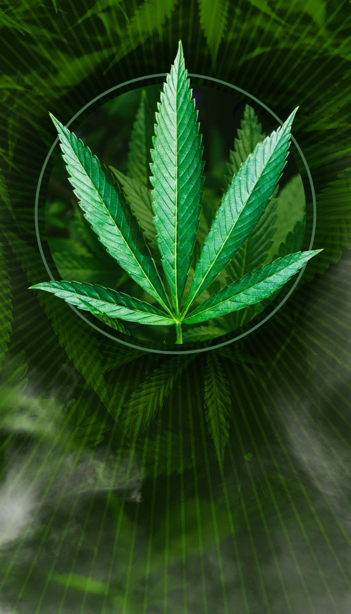 Где лечат марихуаной марихуана праги