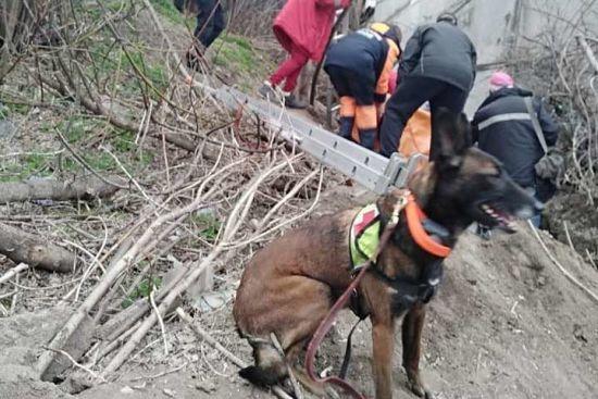 У Дніпрі пес знайшов жінку, яка просиділа у колодязі дві доби