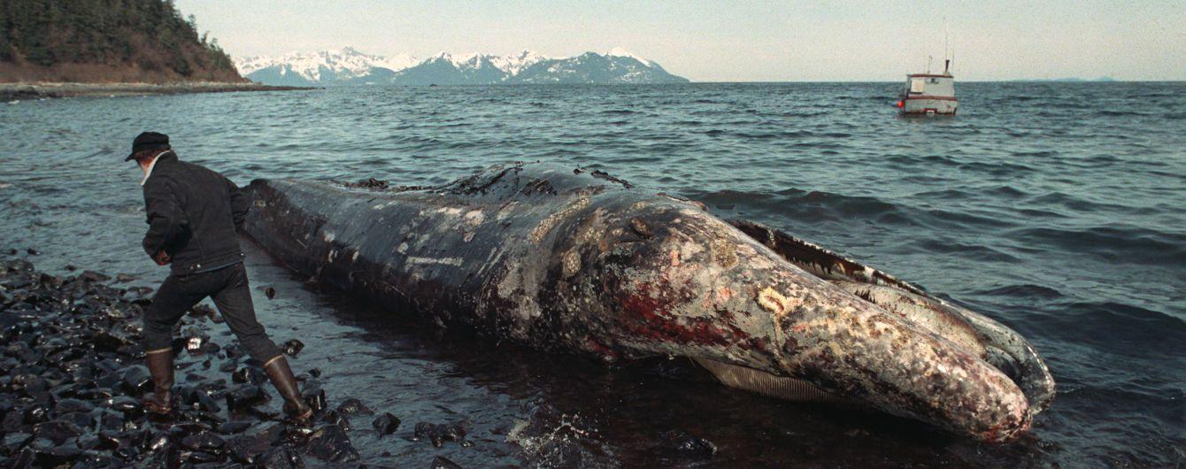 Вилив нафти 30-річної давності продовжує знищувати світовий океан. Розповідаємо, як на життя планети вплинула катастрофа Exxon Valdez