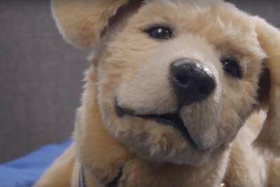 Американці створили робота-собаку для стареньких
