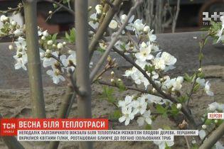 У Херсоні біля теплотраси розквітли плодові дерева