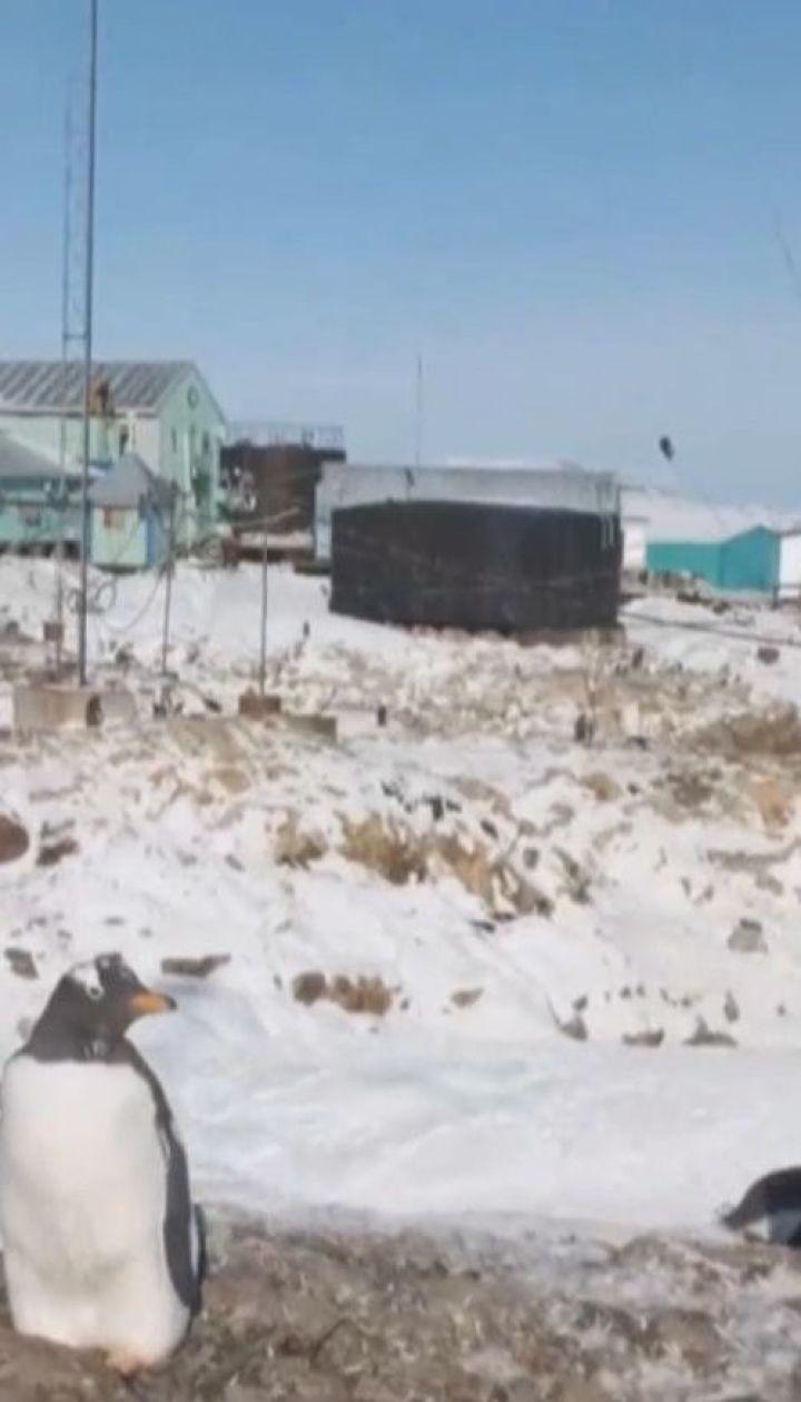 """Путешествие на край земли: украинские полярники отправились на антарктическую станцию """"Вернадский"""""""