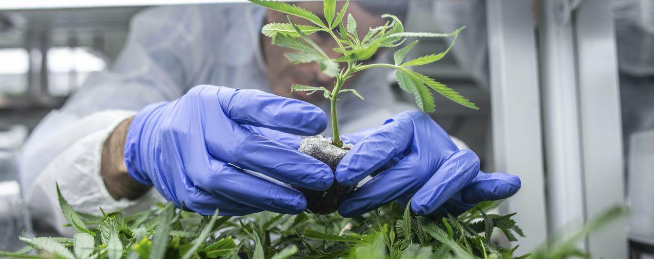 Глава Минздрава Скалецкая рассказала об отношении к легализации марихуаны