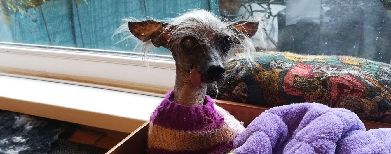 У Великій Британії помер найогидніший собака без зубів і волосся