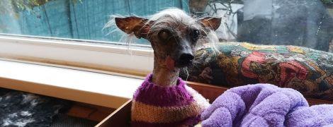 В Великобритании умерла самая отвратительная собака без зубов и волос