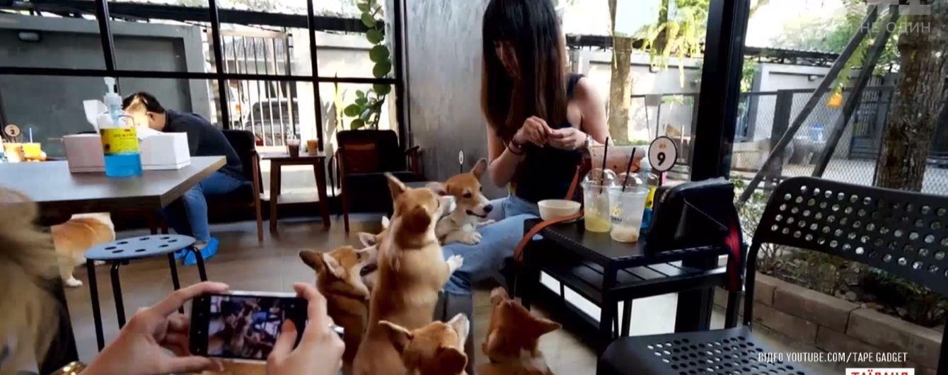 В таиландском кафе посетителей развлекают королевские собаки