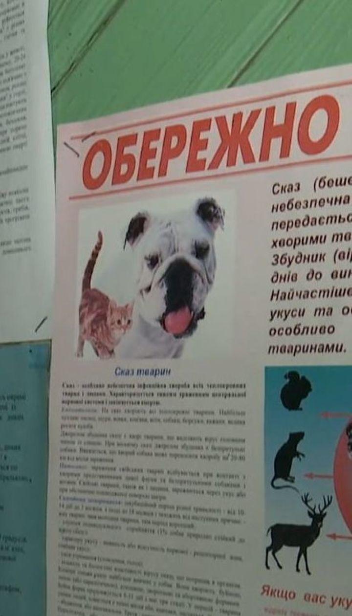 Избирательный участок открывают в ветеринарной клинике в Херсонской области