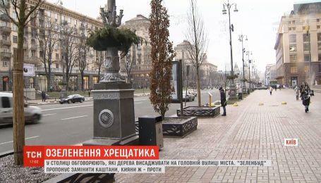 Каштаны, платаны или вишни: в столице решают, какие деревья высадить на Крещатике
