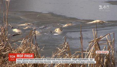 У річці на Чернігівщині вимерла риба