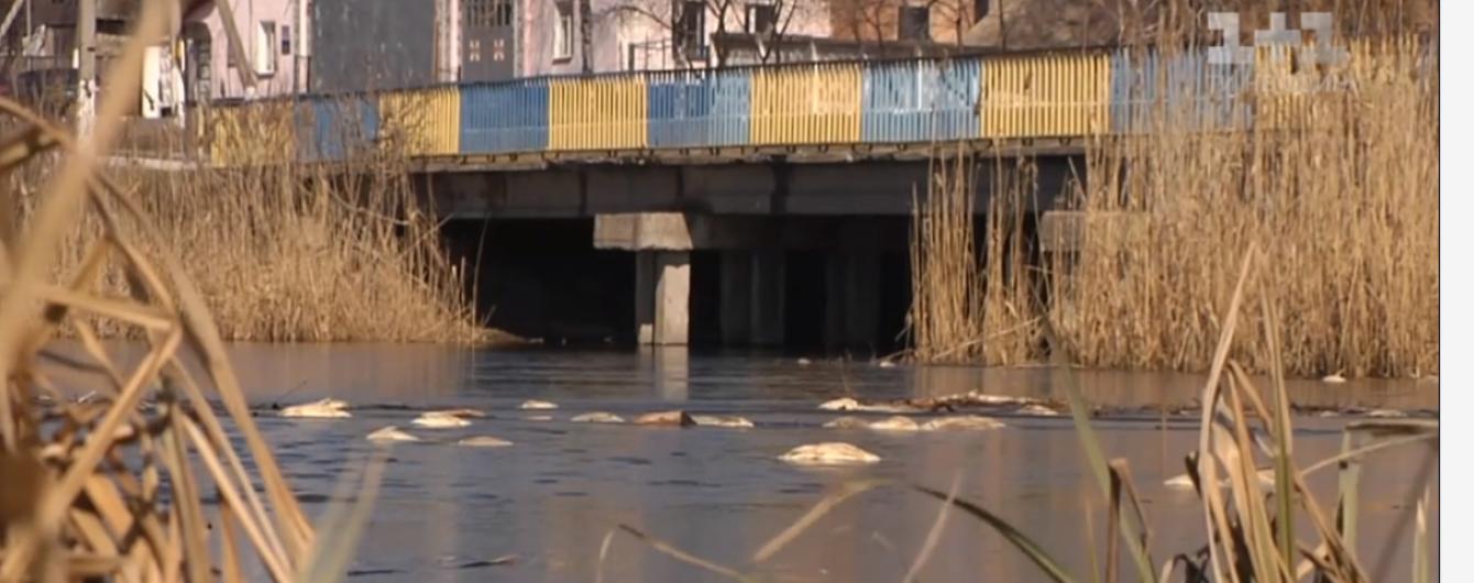 На Житомирщині у двох річках загинула риба, люди нарікають на фабрику з сусідньої області