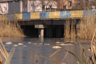 На Житомирщине в двух реках погибла рыба, люди сетуют на фабрику из соседней области