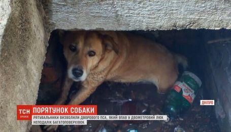 Спасатели освободили бездомного пса, который упал в двухметровый люк