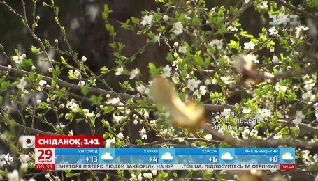 На выходных в Украине будет царить настоящая весенняя погода