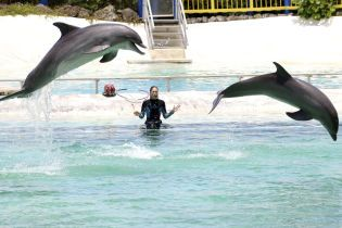 Виноваты люди: за год во Франции погибли 1100 дельфинов