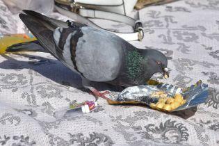В Бердянске зарешетили голубей, чтобы те не летали на балконы. Орнитологи одобрили, а полиция - нет