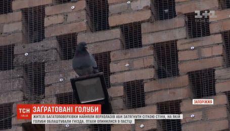 Голубів заґратовували в Запоріжжі: птахи опинились у пастці