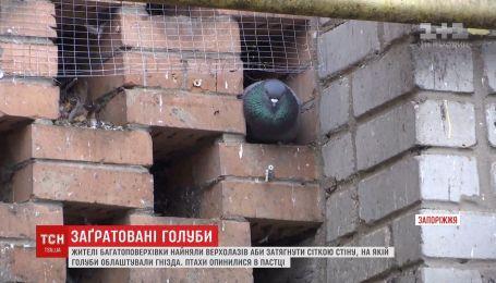 Гнізда голубів і самих птахів огородили ґратами на Запоріжжі