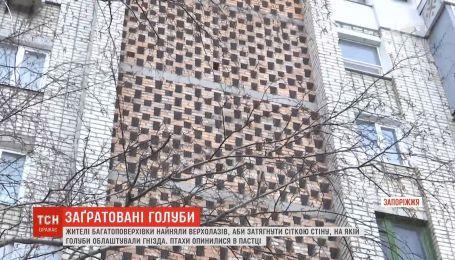 В Запорожье сотни голубей замуровали в стену жилого дома