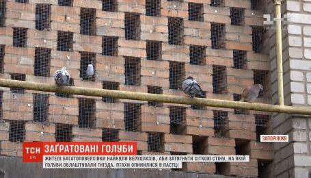 Жители Бердянска замуровали сотни голубей в стену дома
