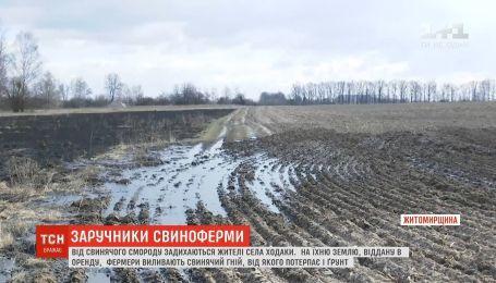 Жители села на Житомирщине задыхаются от свиного смрада