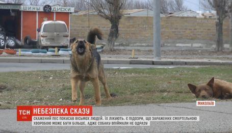 Бешеный пес покусал восемь человек в Николаеве