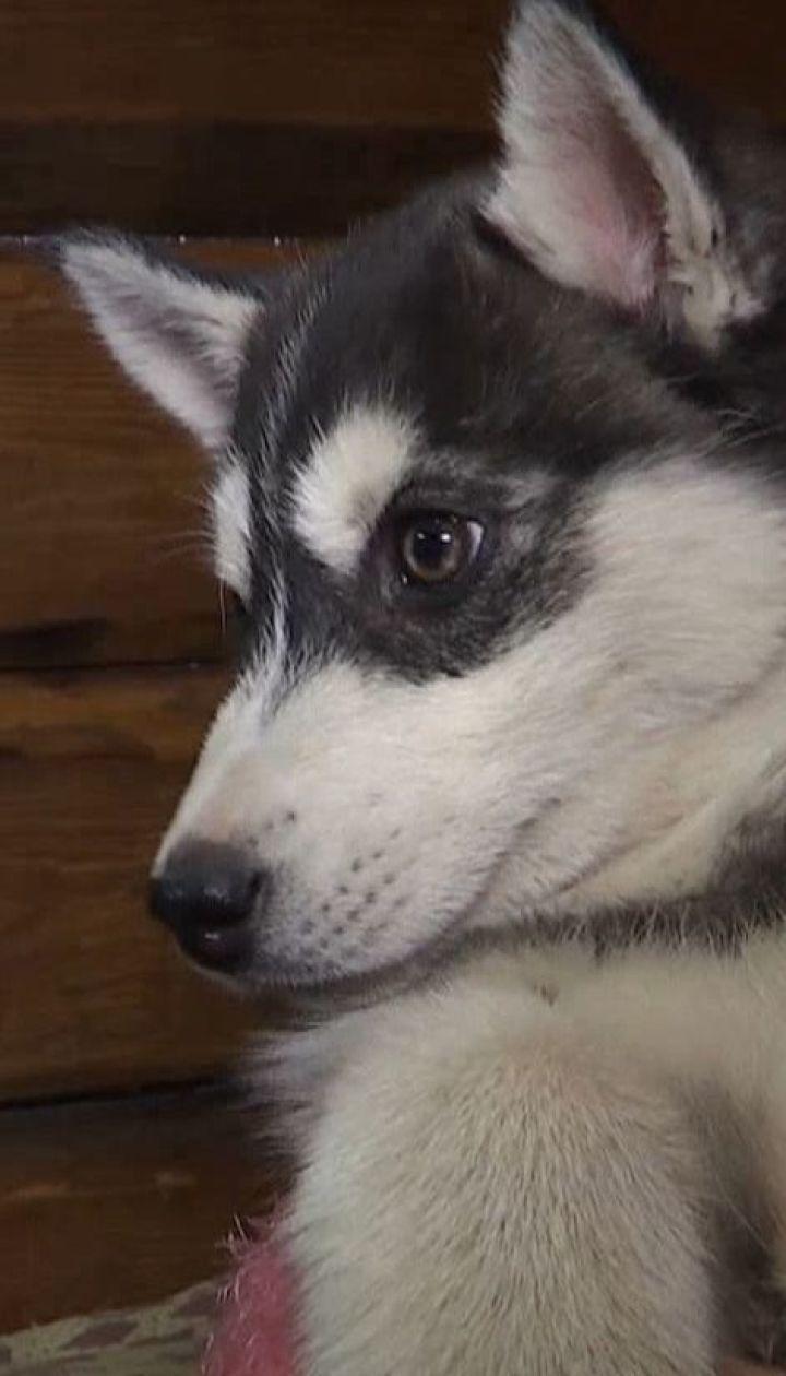 Собаку спасли во Львове благодаря новому банку крови для животных