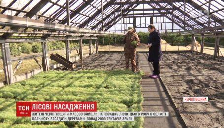 В Черниговской области взялись сажать деревья и восстанавливать леса