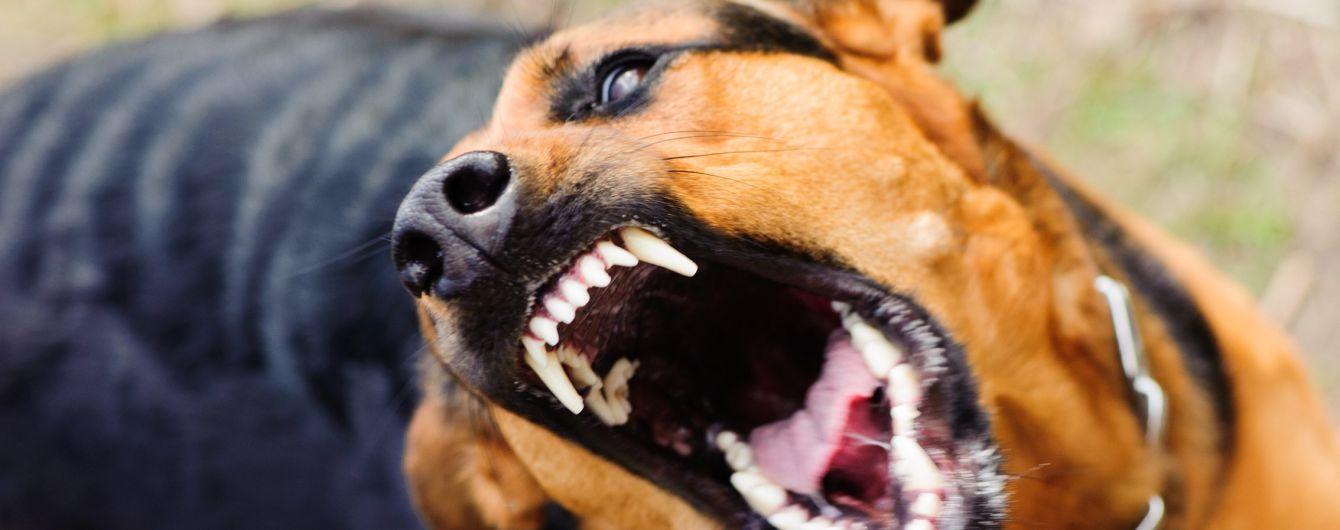 В одном из микрорайонов Николаева быстро ширится бешенство из-за инфицированного пса