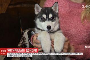 Во Львове спасли первую собаку благодаря банку крови для животных