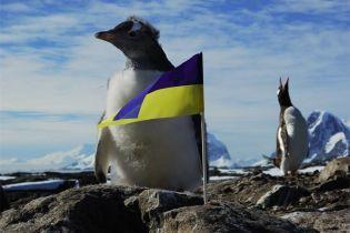 Выборы президента-2019. Завершилось голосование в Антарктиде
