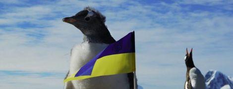 Как голосовал самый отдаленный участок Украины. Обнародованы результаты выборов из Антарктиды