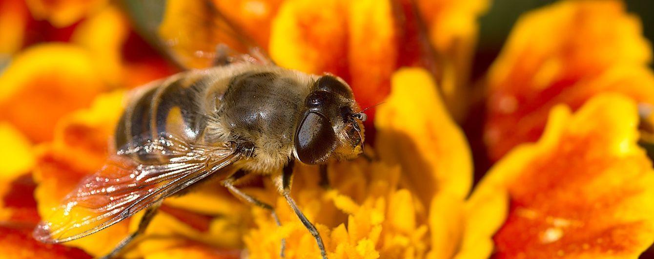 Дожди и жара спровоцировали нашествие насекомых: как спастись от опасных укусов