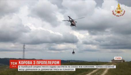 Корову с помощью вертолета спасали в итальянской Сардинии