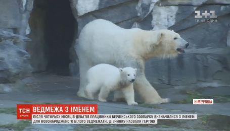 В Берлинском зоопарке работники определились с именем для полярного медвежонка