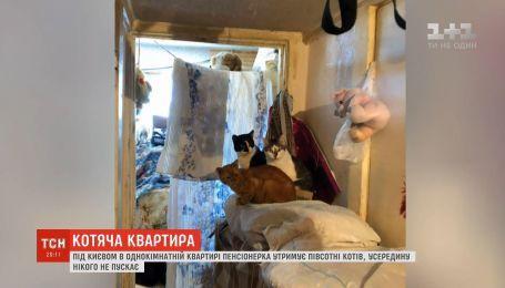 Под Киевом в однокомнатной квартире пенсионерка удерживает полсотни кошек