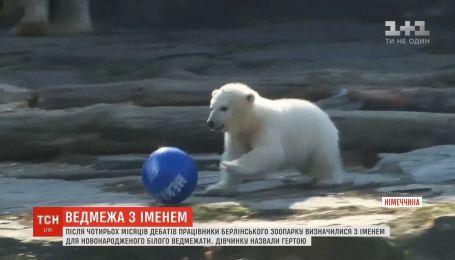 В немецком зоопарке медвежонока назвали в честь местного футбольного клуба