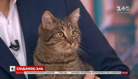 Кот Тимоша ищет семью