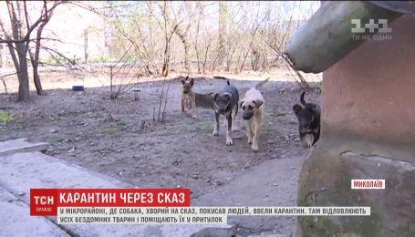 Уже 12 инфицированных бешенством человек обратились за медпомощью в Николаеве