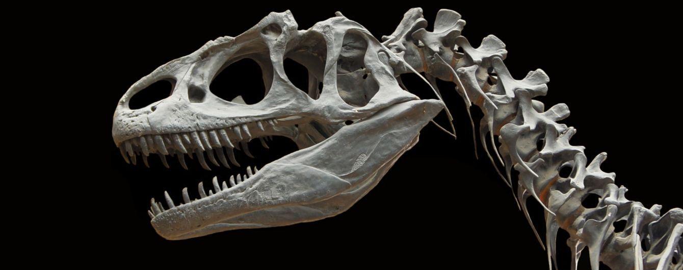 Китайський школяр знайшов 11 скам'янілихяєцьдинозавра