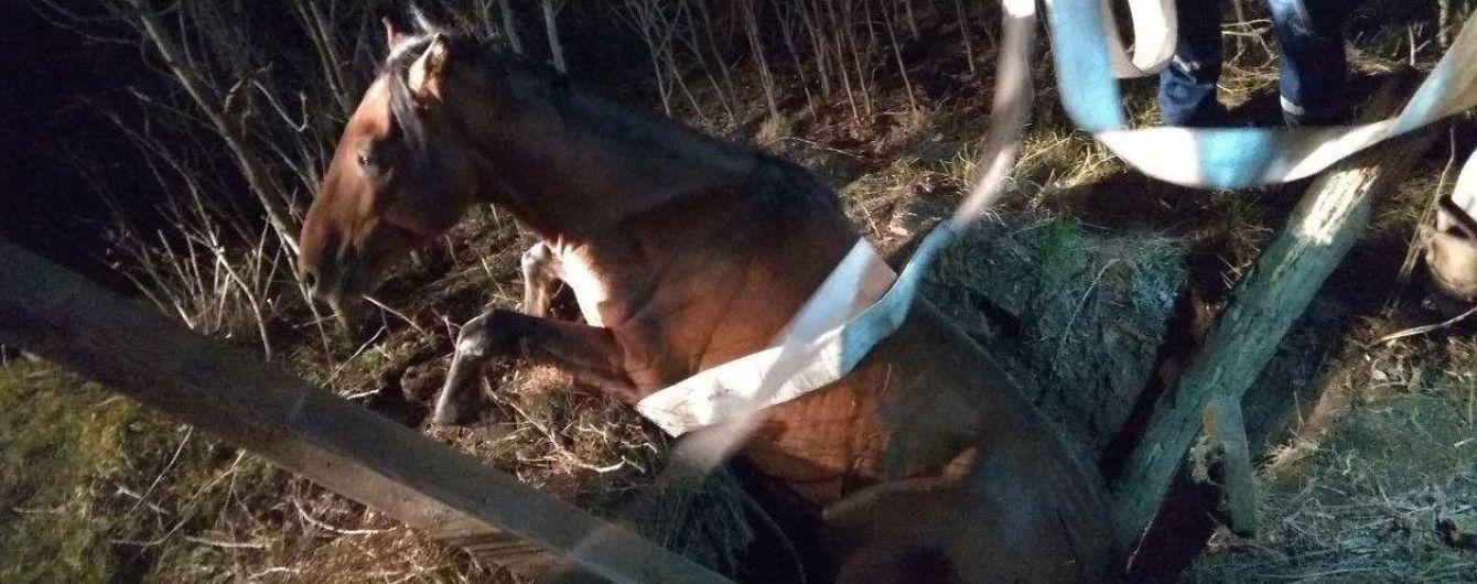 Запорізькі рятувальники витягли з колодязя коня