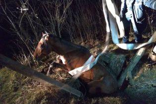 Запорожские спасатели вытащили из колодца коня