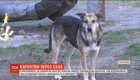 Уже 12 інфікованих: через сказ у мікрорайоні Миколаєва запровадили карантин