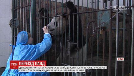 Дві панди з Китаю переїдуть до Данії, де оселяться на 15 років