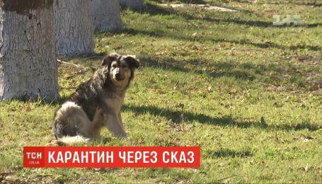 В Николаеве коммунальщики отлавливают бездомных собак, которые могут разносить бешенство