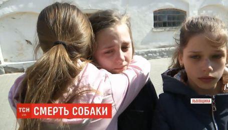 В школе на глазах у детей жестоко убили собаку, которая зашла на территорию заведения