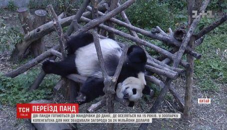 Панды из Китая переезжают в заграждение в Дании за 24 миллиона долларов