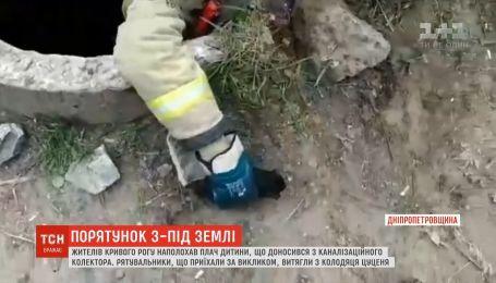 В Кривом Роге спасатели вытащили щенка из канализационного колодца